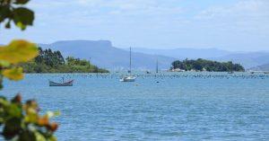 ao visitar Florianópolis conheça as fazendas de ostras