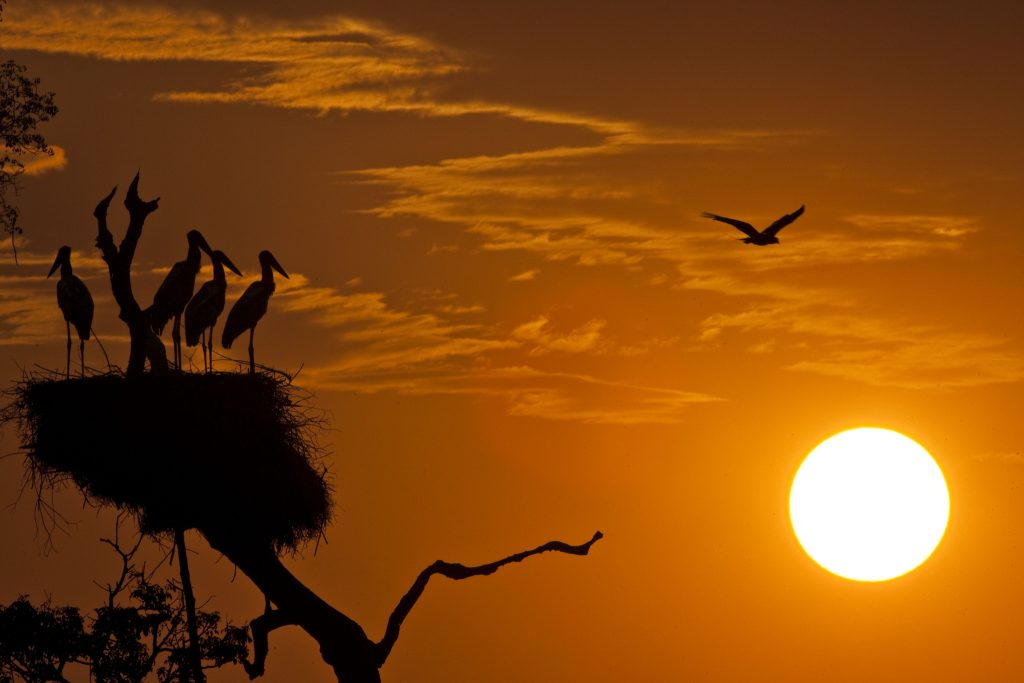 conheça o Brasil Mato Grosso