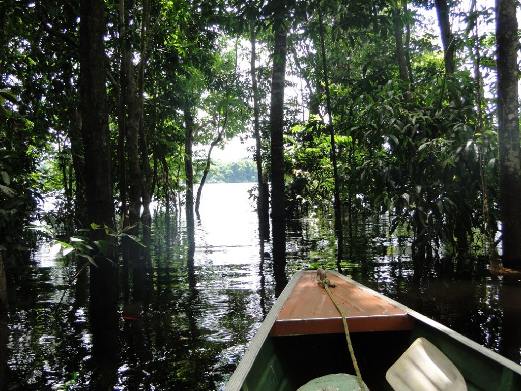 lugares imperdíveis - Amazonas - Anavilhanas