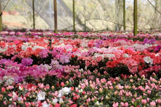 Primavera oferece destinos com temperaturas mais amenas e a beleza das flores aos viajantes - Foto Miguel Schincariol