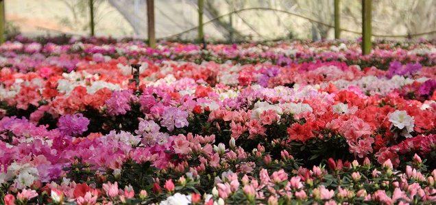 Veja 5 destinos para conhecer na primavera